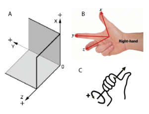 Figure 4: (A) A 3D coordinate frame in cartesian space. (B) The right hand rule all frames will abide by. (C) The thumb represents the axis, and the curled fingers represent convention for positive rotation.